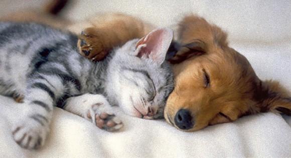 ぐっすり睡眠ヨガ