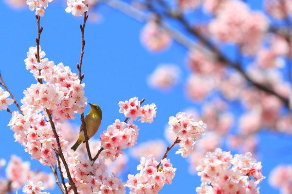 春のデトックス
